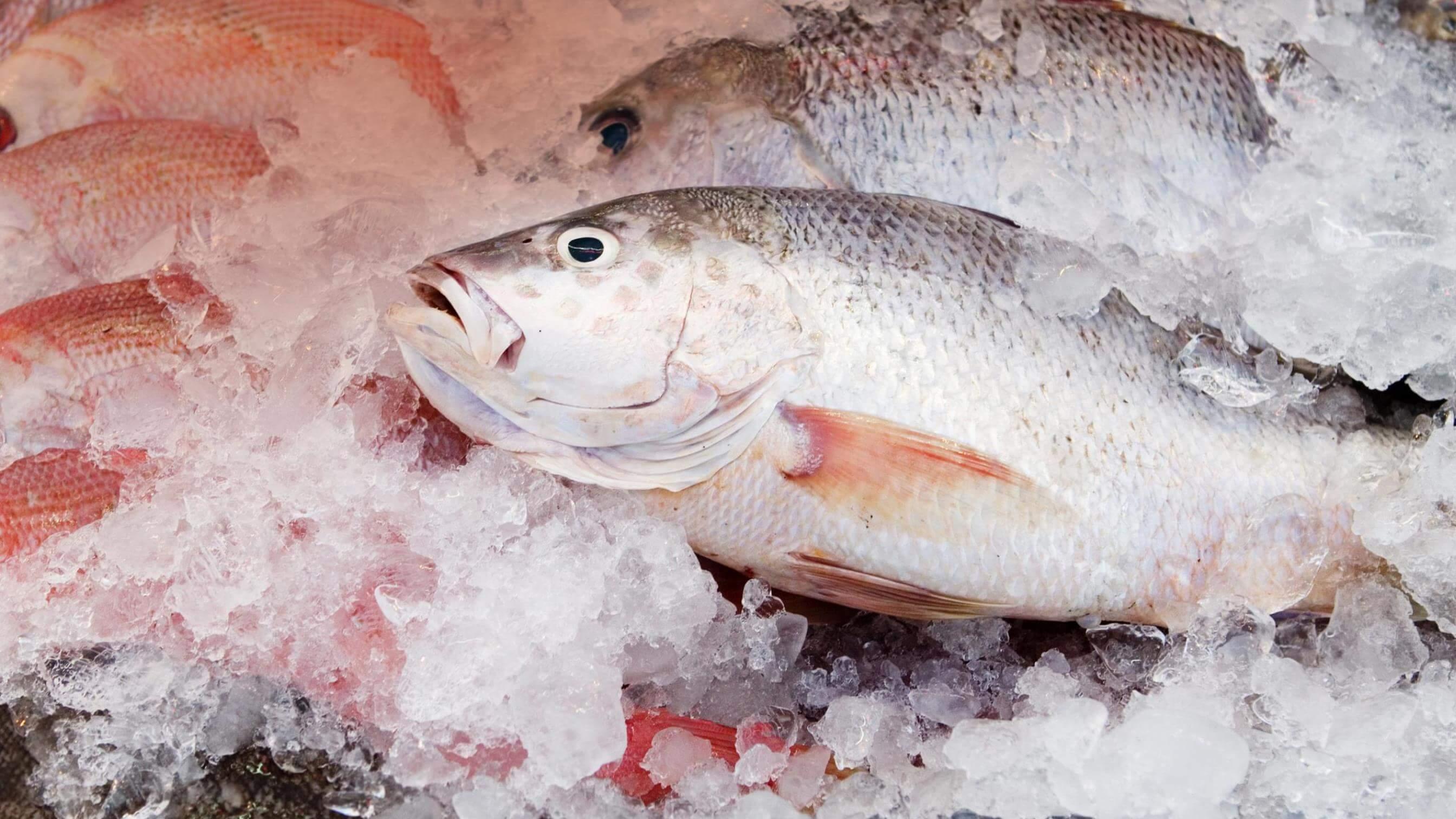 К чему беременным снится замороженная рыба