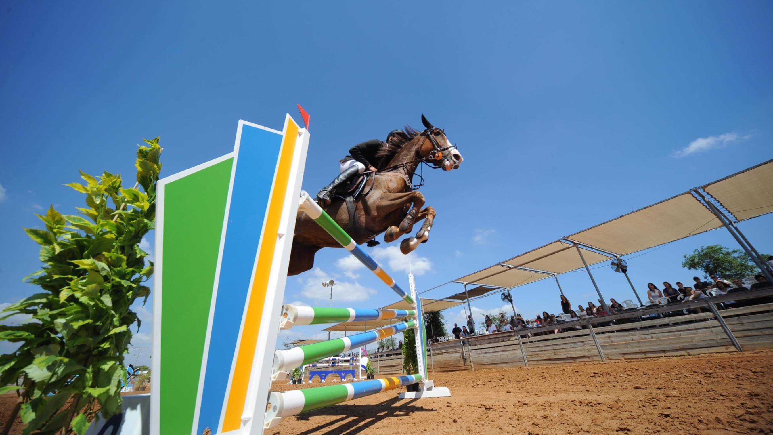 Horse and rider at showjumping event