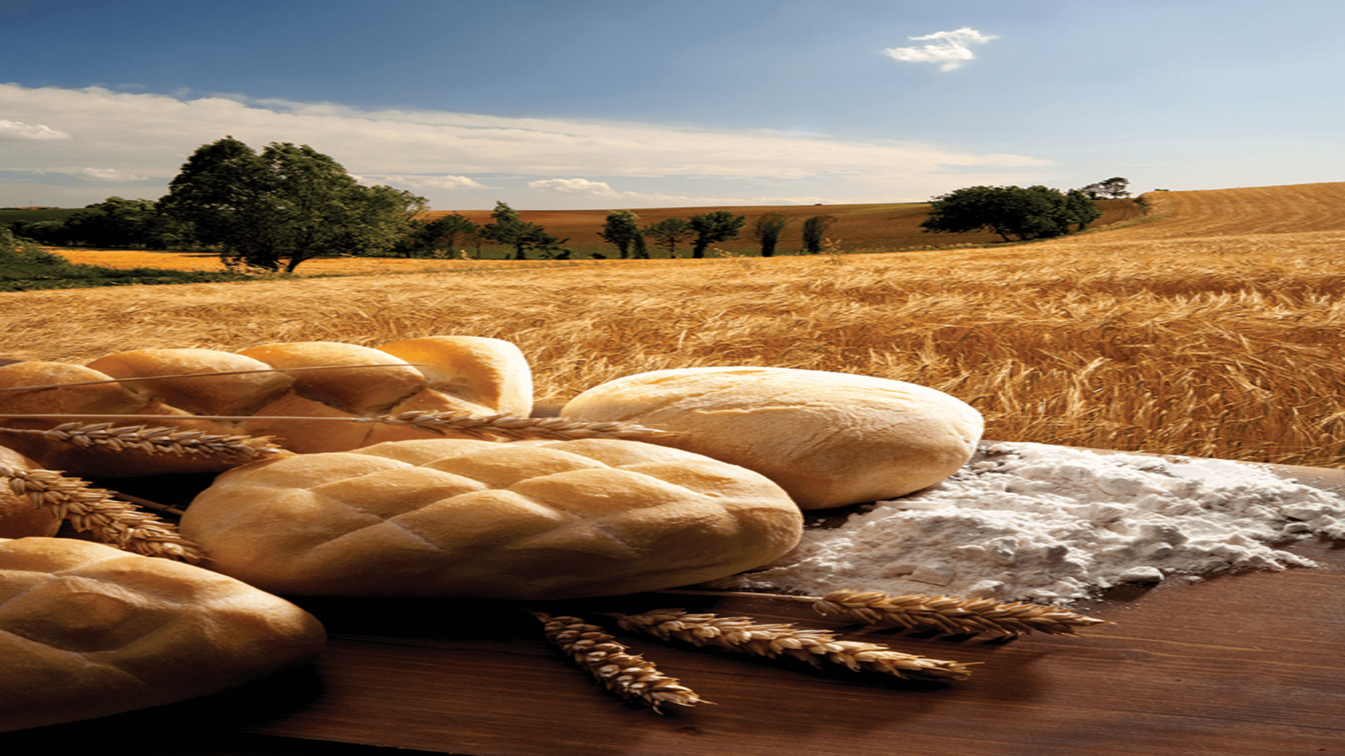 Bakery goods in a field of wheat
