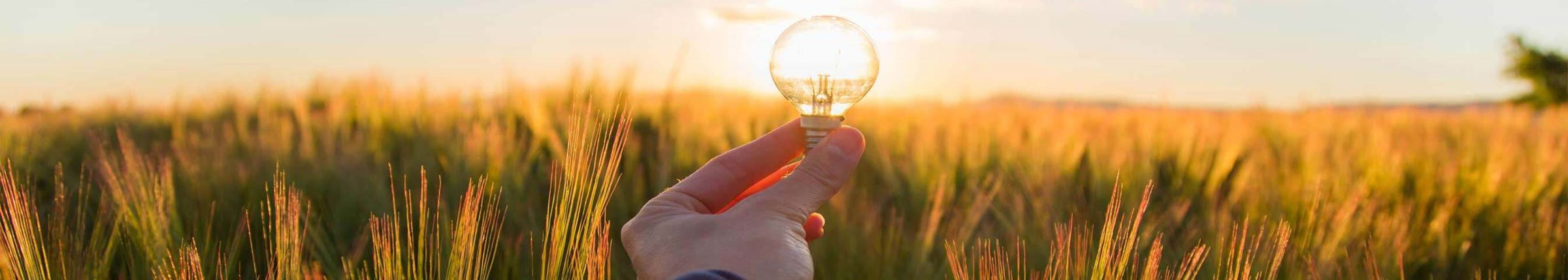 A hand holding a lightbulb in the middle of a field, with sunlight illuminating the bulb